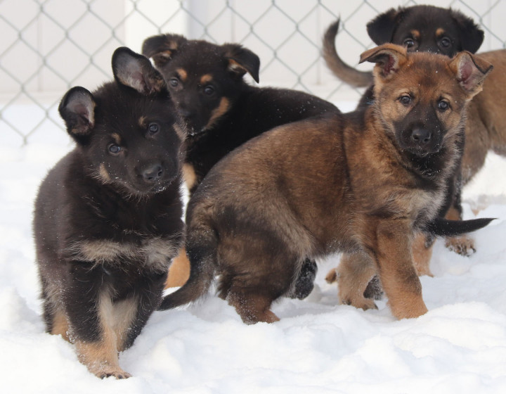 RCMP launches the 2021 Name the Puppy contest